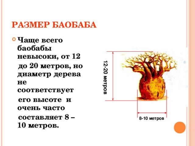 РАЗМЕР БАОБАБА Чаще всего баобабы невысоки, от 12  до 20 метров, но диаметр дерева не соответствует  его высоте и очень часто  составляет 8 – 10 метров. 12-20 метров 8-10 метров