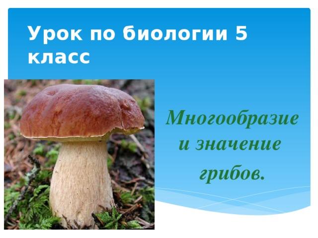 Урок по биологии 5 класс Многообразие и значение грибов.