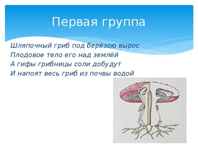 Первая группа Шляпочный гриб под берёзою вырос Плодовое тело его над землёй А гифы грибницы соли добудут И напоят весь гриб из почвы водой
