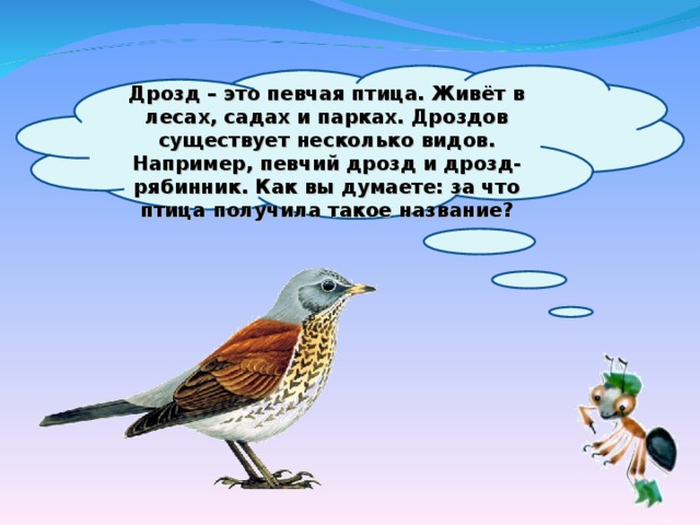 Дрозд – это певчая птица. Живёт в лесах, садах и парках. Дроздов существует несколько видов. Например, певчий дрозд и дрозд-рябинник. Как вы думаете: за что птица получила такое название?