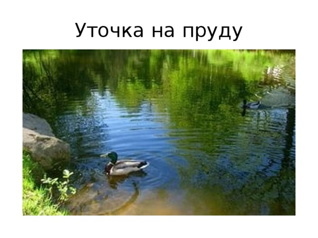 Уточка на пруду