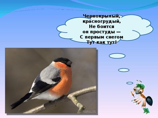 Чернокрылый, красногрудый,  Небоится онпростуды—  Спервым снегом  Тут как тут!