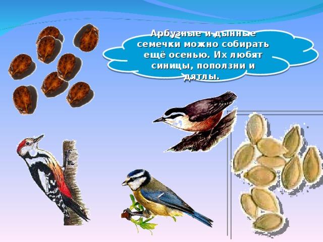 Арбузные и дынные семечки можно собирать ещё осенью. Их любят синицы, поползни и дятлы.