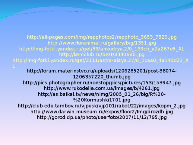 http://all-pages.com/img/repphotos2/repphoto_3653_7829.jpg http://www.floranimal.ru/gallery/big/1351.jpg http://img-fotki.yandex.ru/get/39/ankudrya.2/0_169cb_a2a267e5_XL http://kemclub.ru/best/3440680.jpg http://img-fotki.yandex.ru/get/3111/astra-alaya.27/0_1caa0_4a14dd22_XL http://forum.materinstvo.ru/uploads/1206285201/post-38074-1206357220_thumb.jpg http://pics.photographer.ru/nonstop/pics/pictures/153/153947.jpg http://www.rukodelie.com.ua/images/b/4261.jpg http://as.baikal.tv/news/nimg/2005_01_26/big/R%20-%20Kormushki1701.jpg http://club-edu.tambov.ru/vjpusk/vjp101/rabot/22/images/kopm_2.jpg http://www.darwin.museum.ru/expos/floor2/Img/drozdb.jpg http://gorod.dp.ua/photo/userfoto/2007/11/12/795.jpg