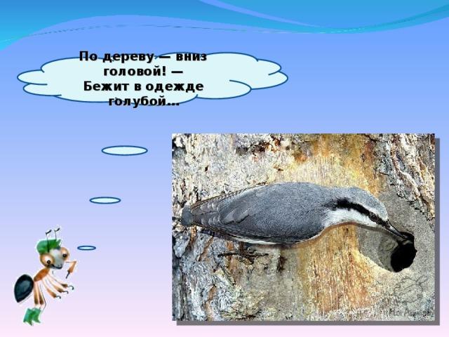 Подереву— вниз головой!—  Бежит водежде голубой…