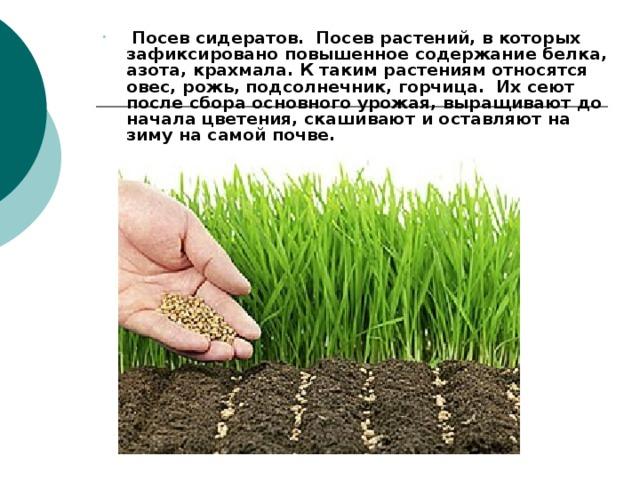 Посев сидератов. Посев растений, в которых зафиксировано повышенное содержание белка, азота, крахмала. К таким растениям относятся овес, рожь, подсолнечник, горчица. Их сеют после сбора основного урожая, выращивают до начала цветения, скашивают и оставляют на зиму на самой почве.  Посев сидератов. Посев растений, в которых зафиксировано повышенное содержание белка, азота, крахмала. К таким растениям относятся овес, рожь, подсолнечник, горчица. Их сеют после сбора основного урожая, выращивают до начала цветения, скашивают и оставляют на зиму на самой почве.