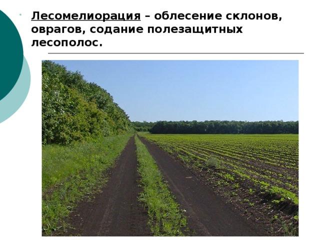 Лесомелиорация – облесение склонов, оврагов, содание полезащитных лесополос. Лесомелиорация