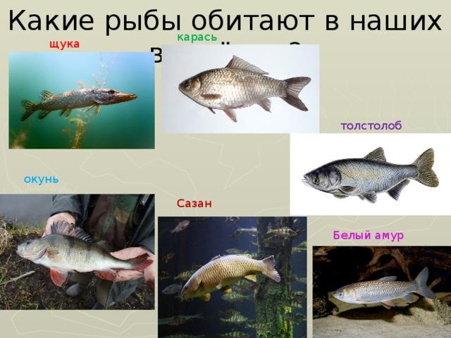 картинки рыб которые водятся в водоемах еао опасное животное