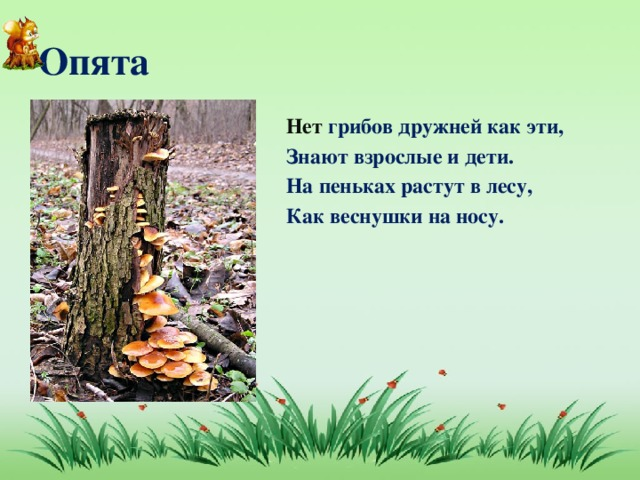 Опята Нет грибов дружней как эти, Знают взрослые и дети. На пеньках растут в лесу, Как веснушки на носу.
