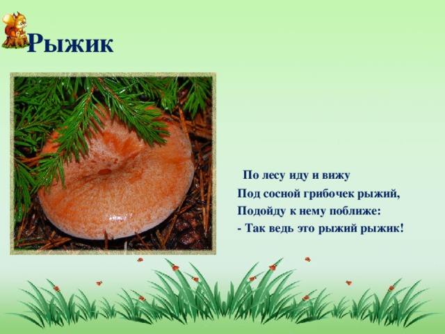 Рыжик  По лесу иду и вижу Под сосной грибочек рыжий, Подойду к нему поближе: - Так ведь это рыжий рыжик!