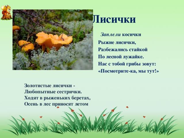 Лисички  Заплели косички Рыжие лисички, Разбежались стайкой По лесной лужайке. Нас с тобой грибы зовут: «Посмотрите-ка, мы тут!» Золотистые лисички -  Любопытные сестрички.  Ходят в рыженьких беретах,  Осень в лес приносят летом