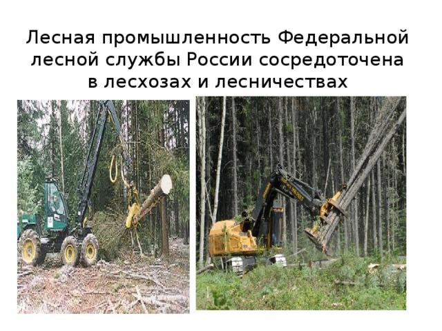 ЛеснаяпромышленностьФедеральной лесной службыРоссиисосредоточена в лесхозах и лесничествах ЛеснаяпромышленностьФедеральной лесной службыРоссиисосредоточена в лесхозах и лесничествах