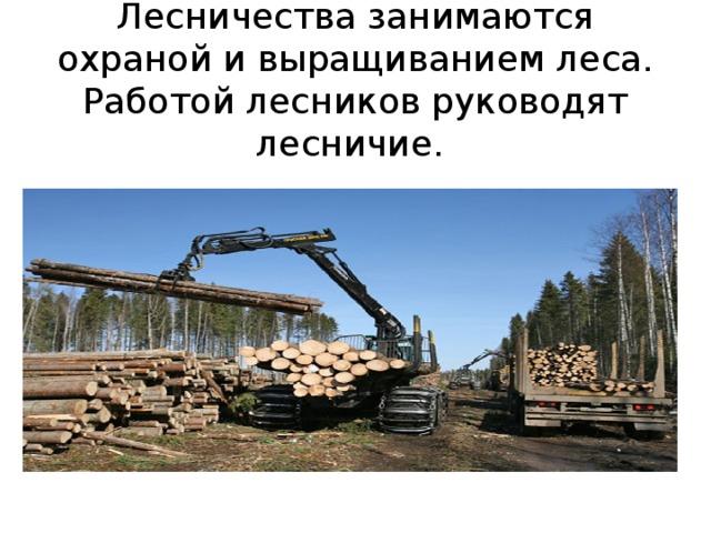 Лесничества занимаются охраной и выращиванием леса. Работой лесников руководят лесничие.