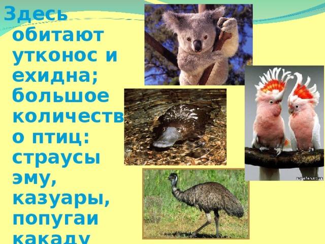 Здесь обитают утконос и ехидна; большое количество птиц: страусы эму, казуары, попугаи какаду