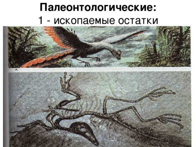 Палеонтологические:  1 - ископаемые остатки