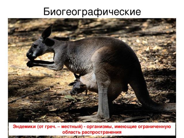 Биогеографические Эндемики (от греч. – местный) - организмы, имеющие ограниченную область распространения
